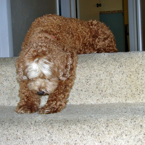 I was so tired after flying that I fell asleep on the stairs!