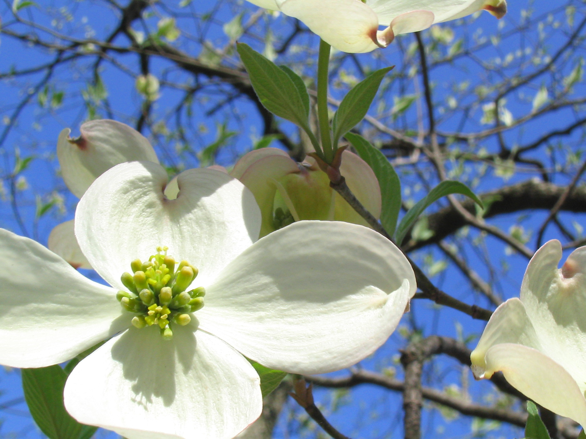 Snow On The Dogwoods Life In The Foothills