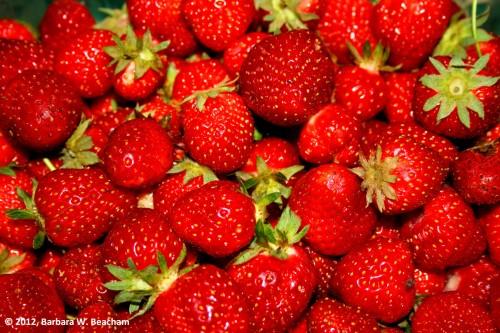 Sweet, sweet strawberries!