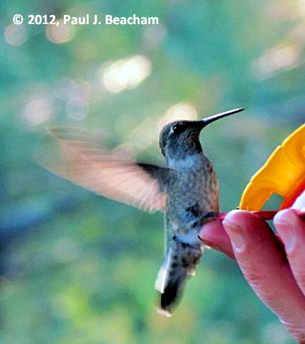 Hummer on my finger!