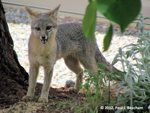 Such a happy fox!