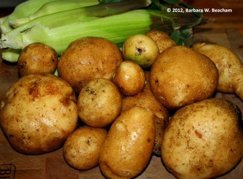 Yukon Gold potatoes!