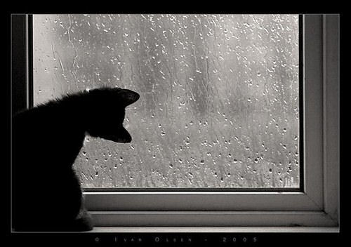 2 rain on a window photo by life in the foothills. Black Bedroom Furniture Sets. Home Design Ideas