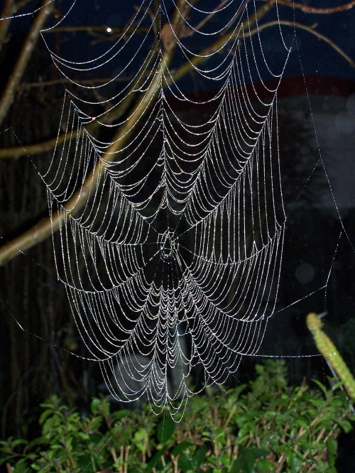 A web in the morning dew