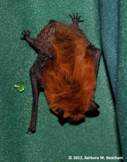 Finding a bat under the umbrella