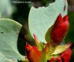 Deciduous plants push up new growth
