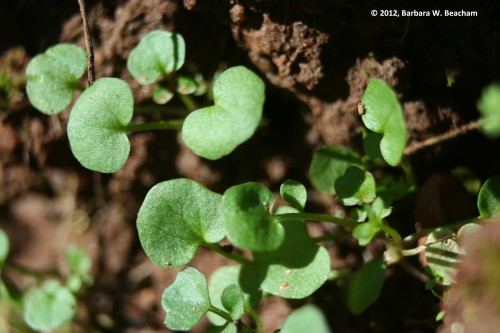 Greens emerge from the ground