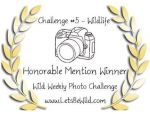 Honorable mention - Challenge #5:  Wildlife!