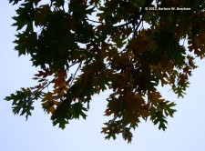 Leaves still hanging on