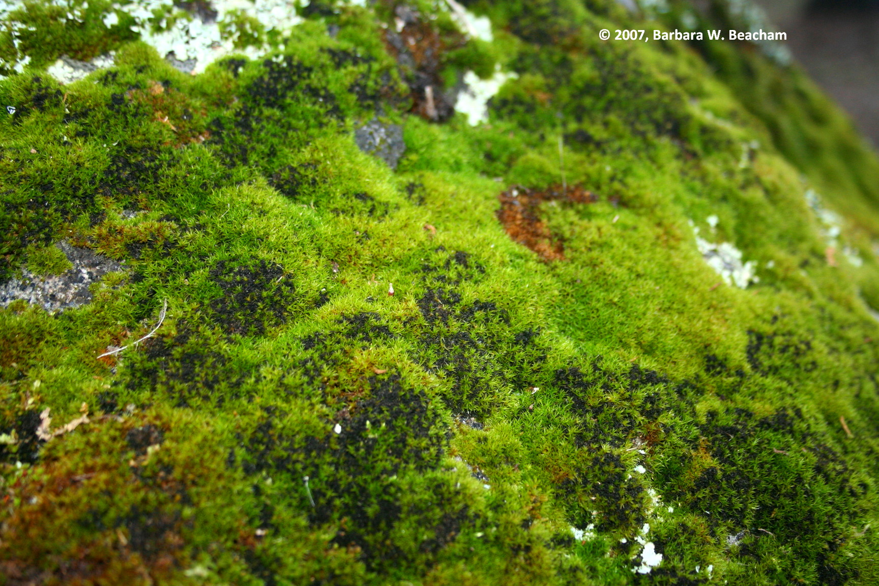 Moss Green | Life In The Foothills