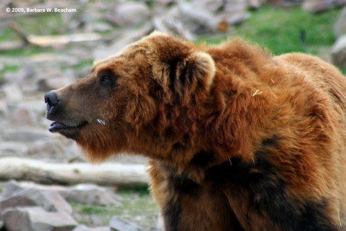 Such a lovely bear!