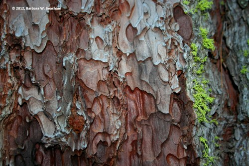 The texture found in the bark of a tree