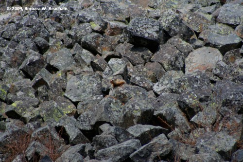 Where is the Marmot?