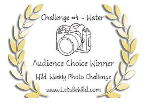 Wild Weekly Challenge #4 Award!