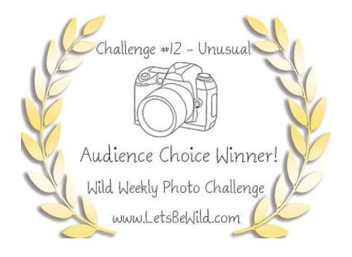 Audience Choice Award - Challenge #12