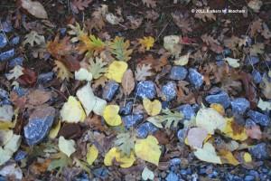 Black Oak and Redbud Litter