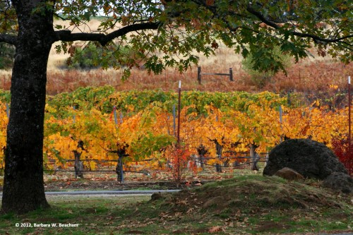 The vineyard displays its fall colors