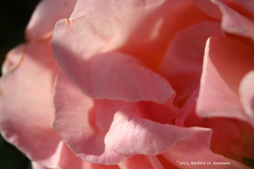 Layers of pink