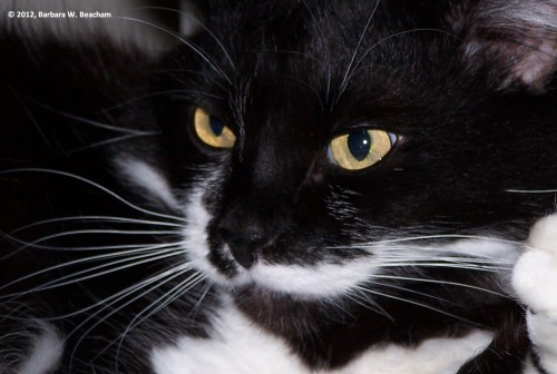 Madison's whiskers