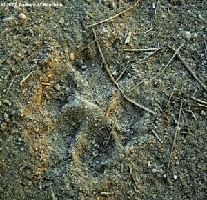 Unknown footprint