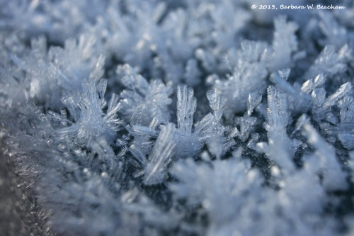 A field of ice crystals