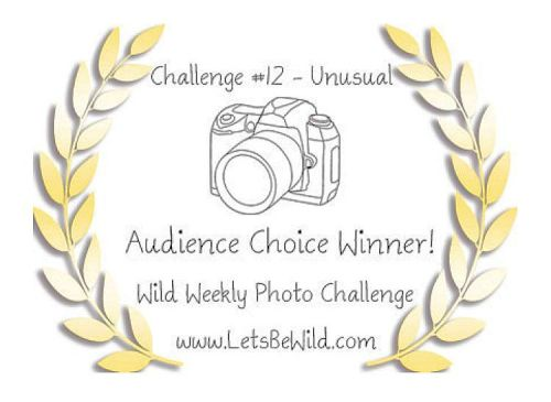 Audience Choice Award - Challenge #12