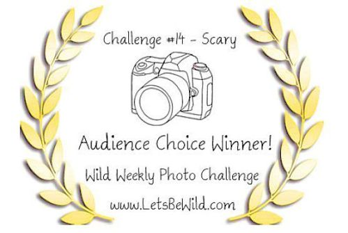 Audience Choice Award - Challenge #14