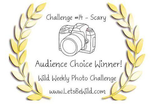 Audience Choice Award - Challenge #14