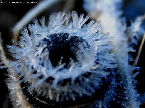 Ice Crystals on a sprinkler head