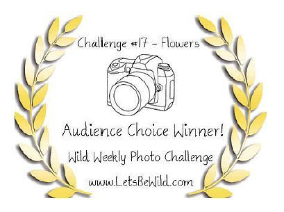 Audience Choice Award - Challenge #17