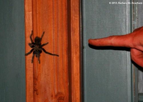 One big spider!