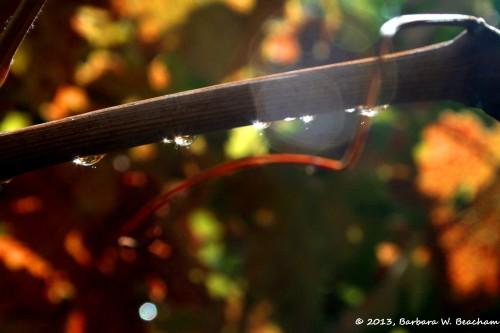 Sunshine through raindrops