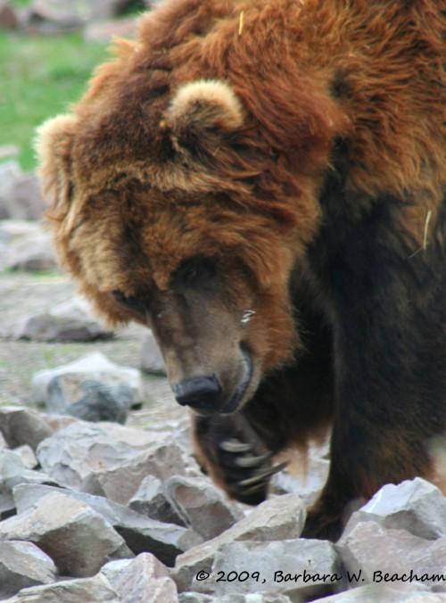 A bear sighting