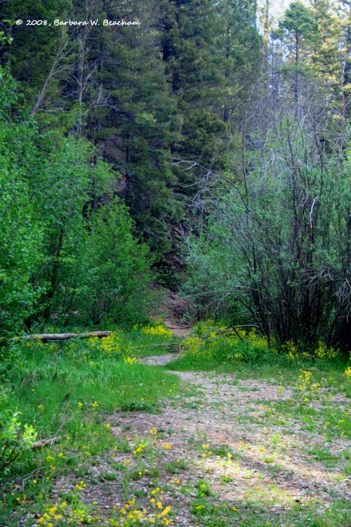 A trail leading into the woods