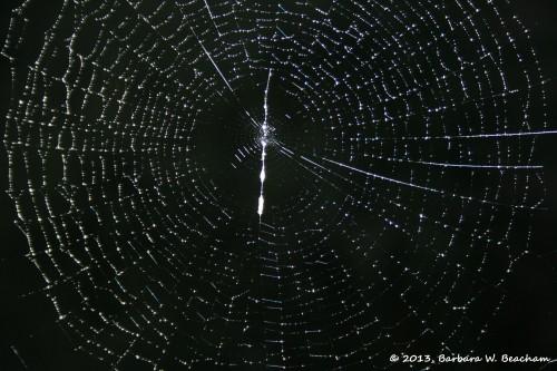 An amazing web!