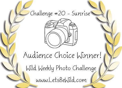 Audience Choice Award - Challenge #20