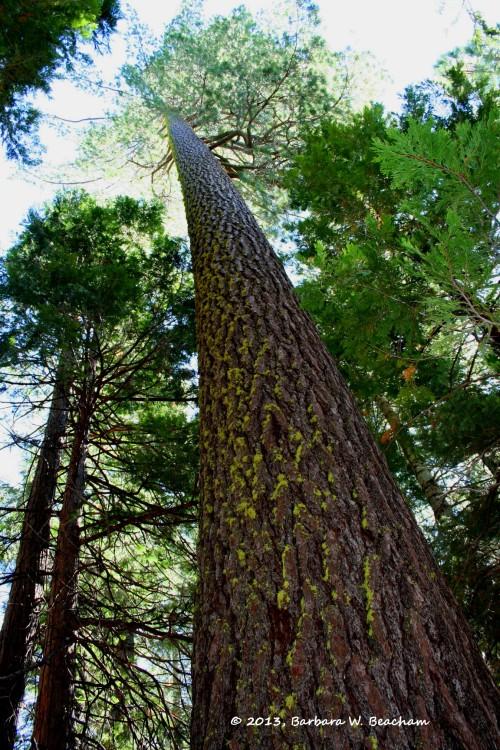 One big tree!