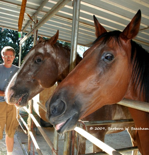 A bit horsey!