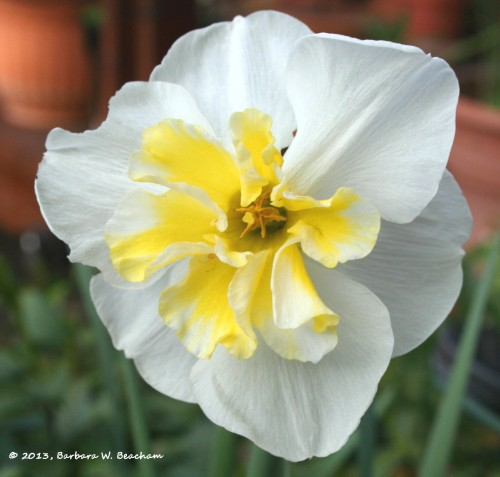 A lovely daffodil brightens the day!