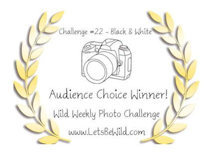 Audience Choice Award - Challenge #22