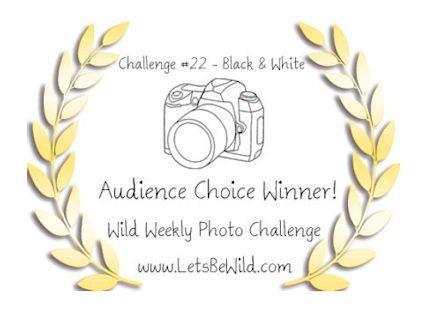 Audience Choice Award - Challenge #22