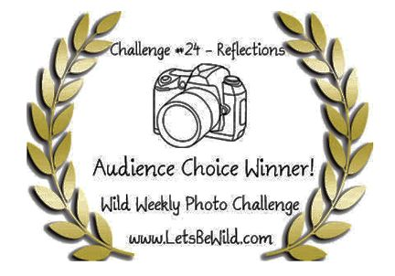 Audience Choice Award - Challenge #24