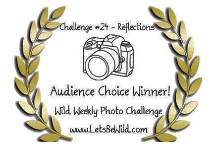 Audience Choice Award - Challenge #24