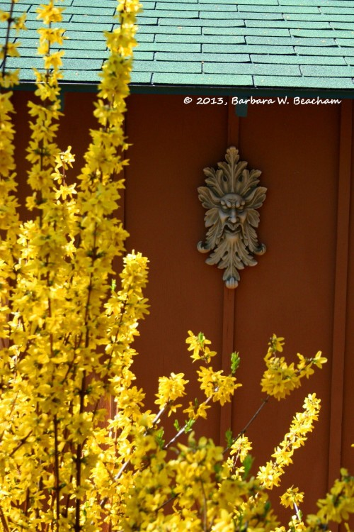 Lovely forsythia