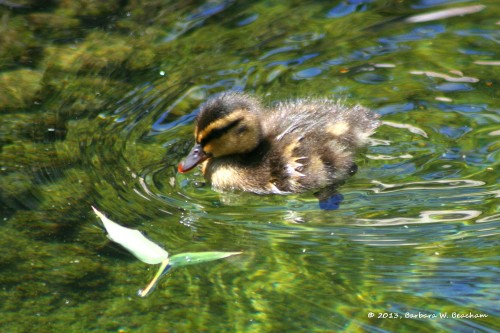 A baby swims