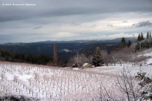 The vineyard sleeps