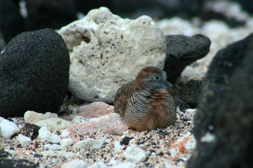 A bird resting on the beach