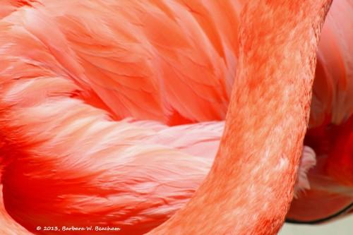 Flamingo feather textures