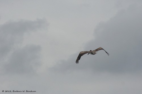 Flying away!