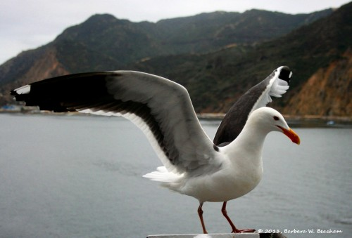 The Seagull dries it wings